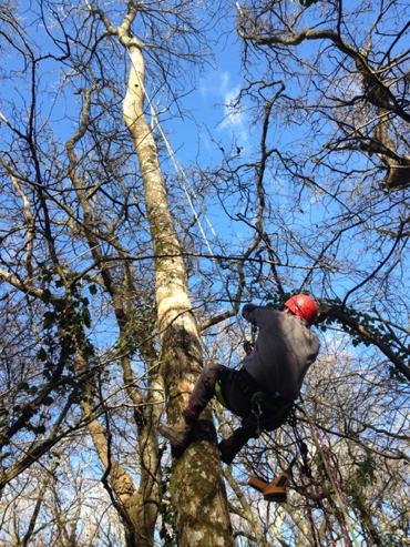 Tree Climbing Surveys for Newbury Flood Alleviation Schem