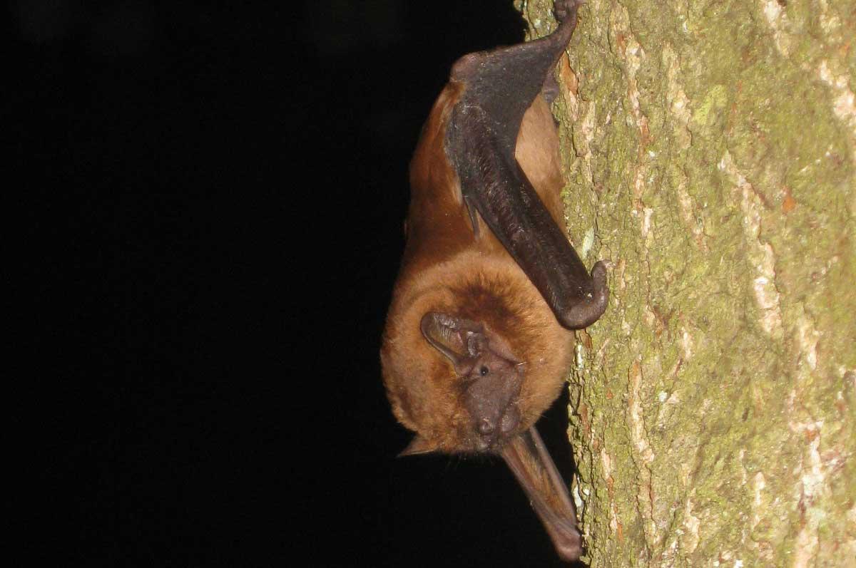 Advanced Bat Surveys for Exeter Flood Defence Scheme